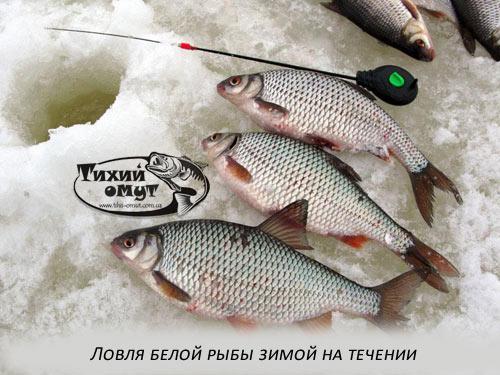 Ловля белой рыбы зимой на течении