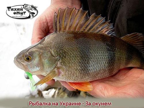 Рыбалка на Украине - За окунем