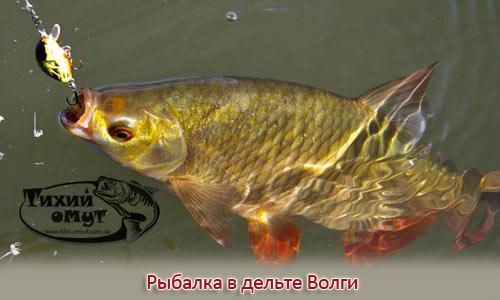 Рыбалка в дельте Волги (Часть - 1)