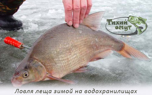 Ловля леща зимой на водохранилищах