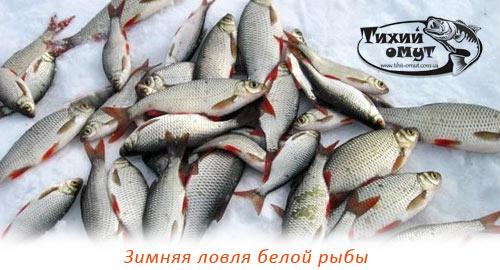 Зимняя ловля белой рыбы