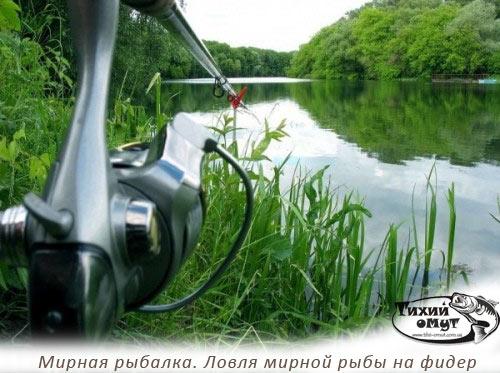 Мирная рыбалка. Ловля мирной рыбы на фидер