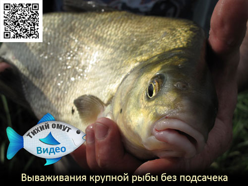 Вываживания крупной рыбы без подсачека
