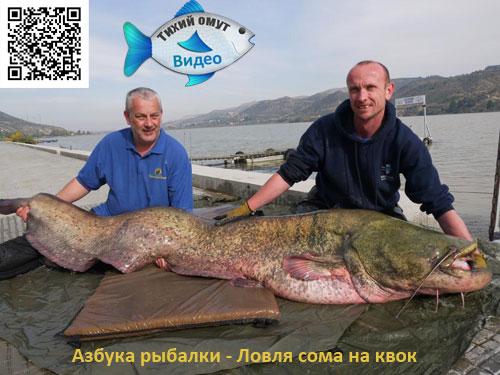 Азбука рыбалки - Ловля сома на квок