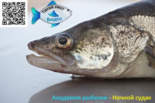 Академия рыбалки - Ночной судак