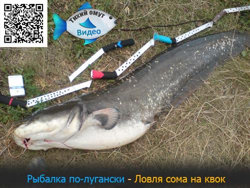 Рыбалка по-лугански - Ловля сома на квок