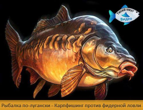 Рыбалка по-лугански. Карпфишинг против фидерной ловли