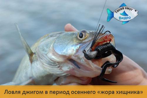 Рыбалка по-лугански. Ловля джигом в период осеннего «жора хищника»