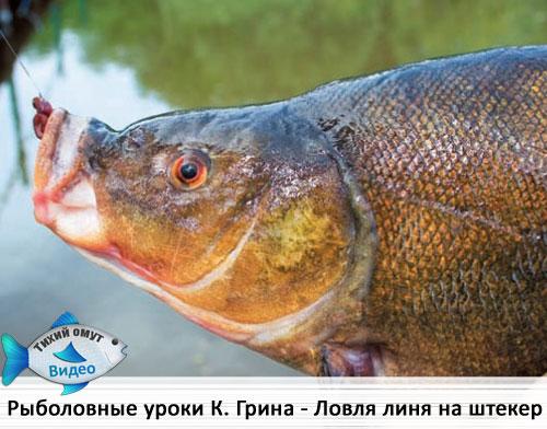 Рыболовные уроки Кевина Грина - Ловля линя с берега (штекер).